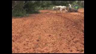 Dry Land Farming in India - Part - 1