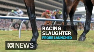 'You're going to die, you maggot': Abattoir investigated after racehorse cruelty | ABC News