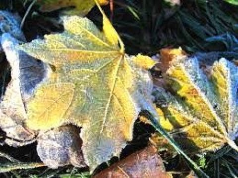 Autumn Arrives in August over the US & Canada | Mini Ice Age 2015-2035