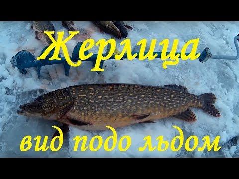Видео Зимняя рыбалка ловля Щуки на жерлицы . подводная сьёмка