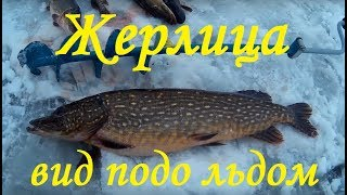 Зимняя рыбалка ловля Щуки на жерлицы . подводная съёмка . Fishing Pike