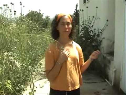 Renewing Kibbutz Hannaton Informational Video