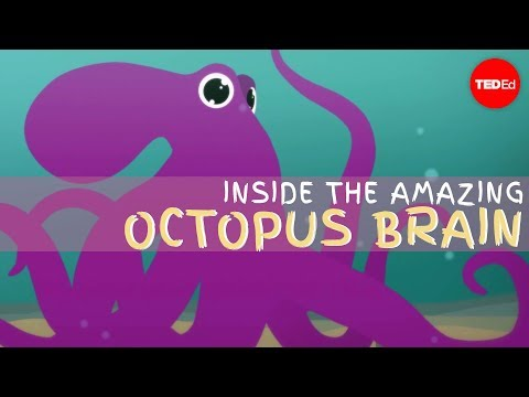 Thumbnail: Why the octopus brain is so extraordinary - Cláudio L. Guerra