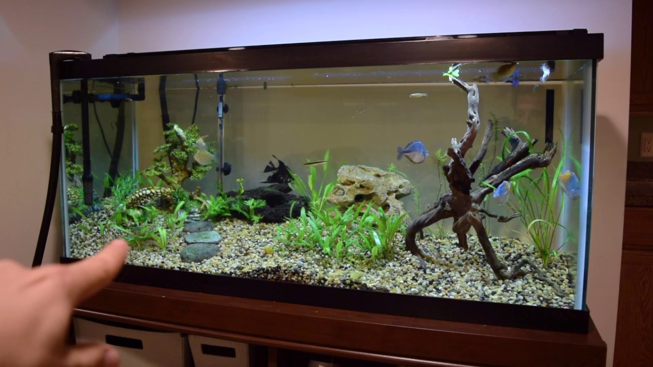 75 gallon planted aquarium new setup youtube