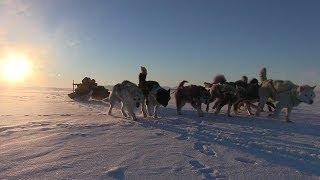 大部分が北極圏にあるグリーンランドで、すたれつつある先住民伝統の犬...