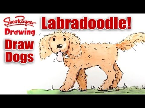 How To Draw A Labradoodle Youtube