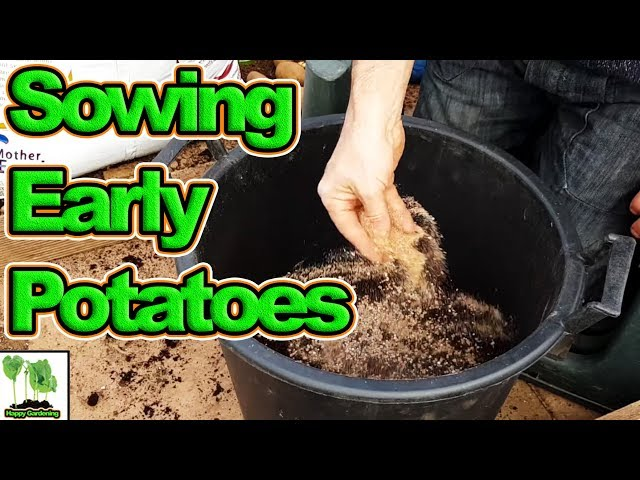 How To Grow First Early Potatoes In Containers (2018) (Best Crops Ever)