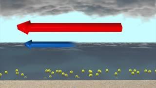Salton Sea blamed for Southern California