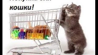 покупки из зоомагазина для кошки.Animal star.