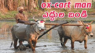 OX CART Man | OX CART in the mud | village paddy life