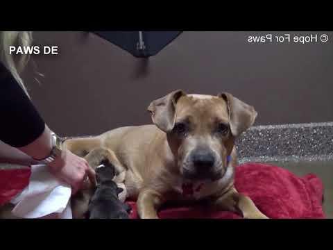 Obdachlose Hundemutter mit Babys wird gerettet.. du glaubst nicht was dann passierte..