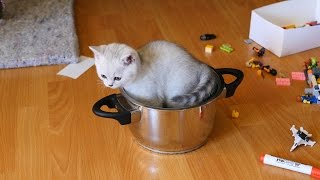 Смешные и забавные котята играют * Прикольные котята