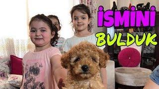 YENİ KÖPEĞİMİZİN İSMİNİ BULDUK !!! Hoverboarda Binen İlk Köpek