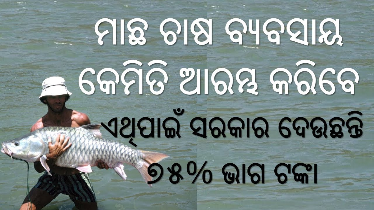 Fish Farming in Odisha - Machha Chasha Byabasaya - How to start Fish  Farming Business