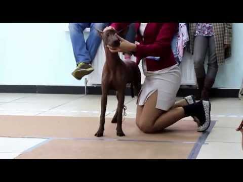 5th National Dog Show of National Club breed Xoloitzcuintli