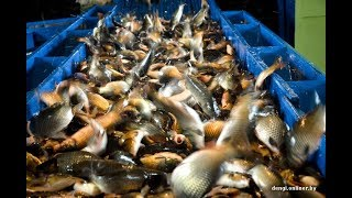 Яжелбицкий рыбхоз