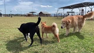 Amebaブログ「狆犬ちづひめ」2018年10月14日投稿をご覧ください。