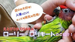 【えとぴりかOSAKA】カラフル!パワフル!なインコのご紹介!【ローリー・ロリキート】