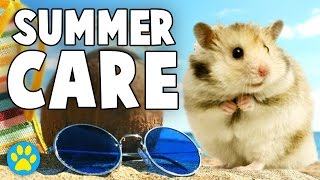 Caring For Hamsters In Hot & Humid Weather