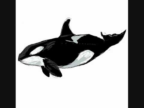 Como dibujar una ballena asesina orca - Dibujos de animales - YouTube