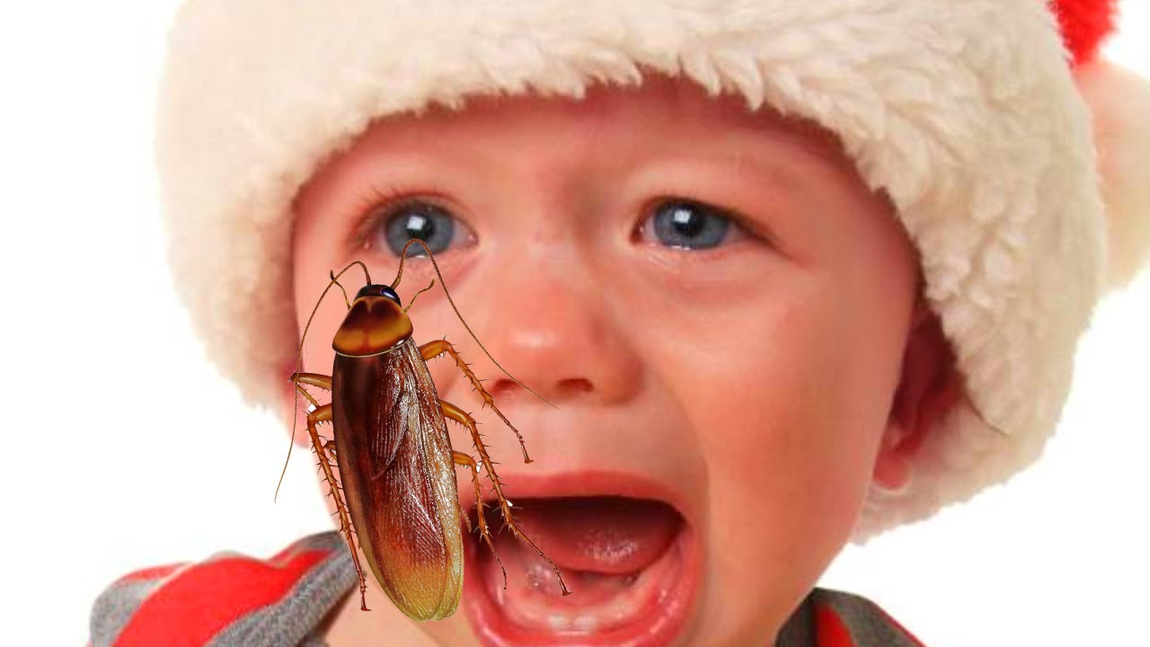 Do Roaches Carry Disease?  Can they get you sick