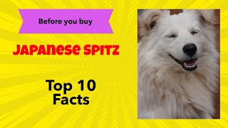 Top 10 Facts you should know about Japanese Spitz