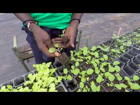 How to Make a Home Garden (Part 3)