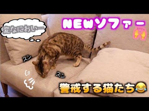 猫ちゃん向けのソファー買ったのに警戒するんですけど…