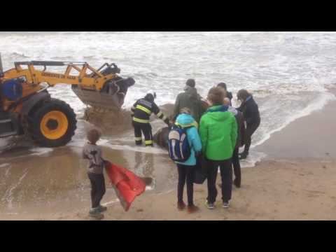 Horse Stuck in Sand is Rescued in Belgium