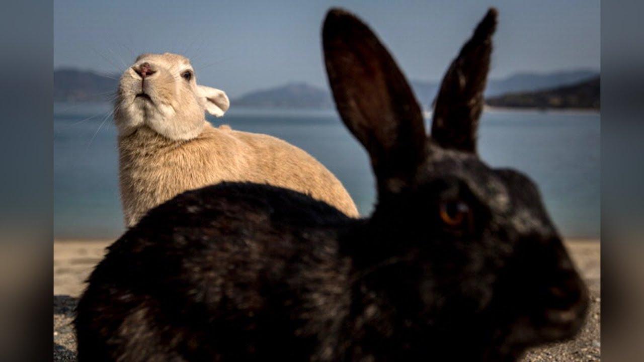 Animales 360 Con Xiomara El Terrible Maltrato En Las Granjas De Conejos Youtube