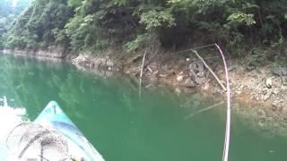 6月~8月、ダムでのマッドラット動画。