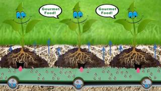 NextGen Home Experience - Water Conserving Irrigation Ideas