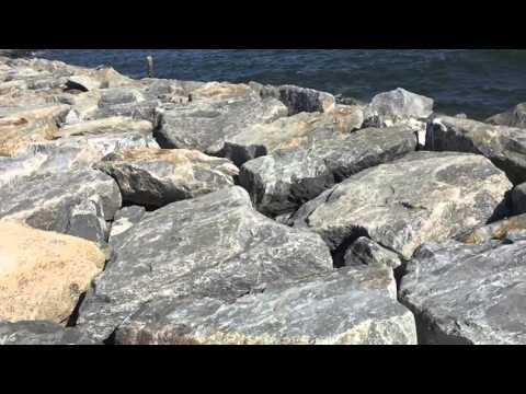 Strymon Ocean Sounds By Citizen Lusca (Nic Ellis)