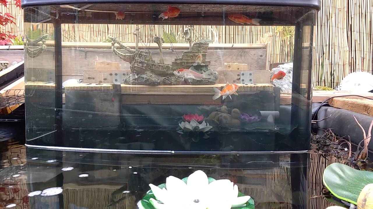upside down fish tank fx in pond youtube