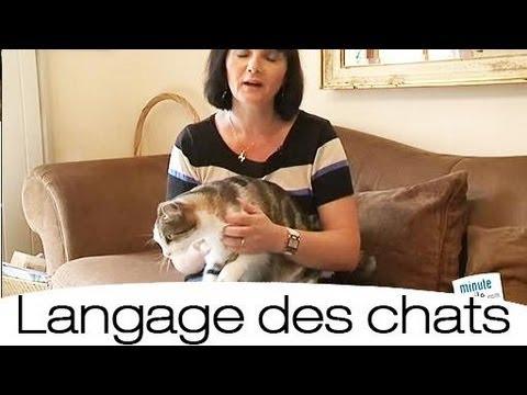 Comment comprendre le langage des chats ?