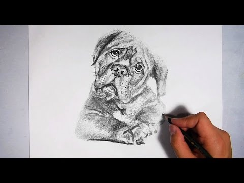 how to draw a realistic dog youtube
