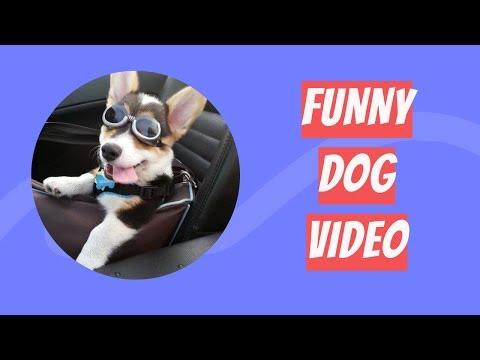 Funniest Dog Compilation 2019 | Funny Dog Videos