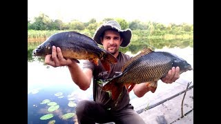 Catching carp on corn and pop-up / WHERE TO SEARCH FOR CARPA IN SUMMER / KARPFISHING ART.