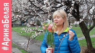 ЗАЦВЕЛ АБРИКОС, ВЕСЕЛАЯ ЖИЗНЬ ЗА КАДРОМ | Arina Belaja