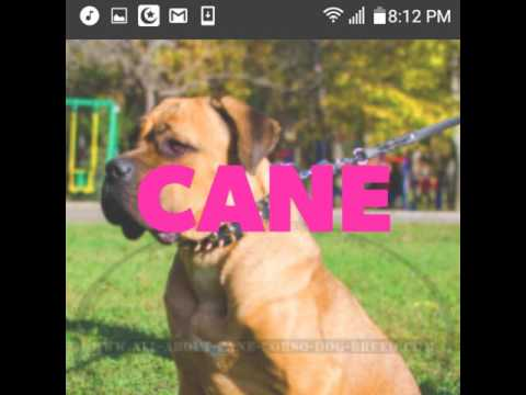 Me and my Cane Corso