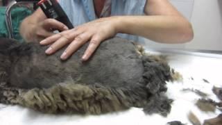 наш кот у парикмахера