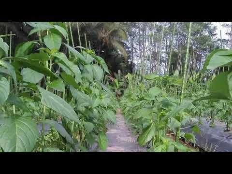 # TIS # 7 SAMPAH DAPUR INI JANGAN DIBUANG, SIRAMKAN KE TANAMAN&LIHAT HASILNYA from YouTube · Duration:  10 minutes 37 seconds