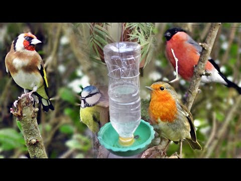 water feeder for bird cages DIY simple method , How to