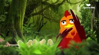 Mitt liv som kyckling: Uppfödning