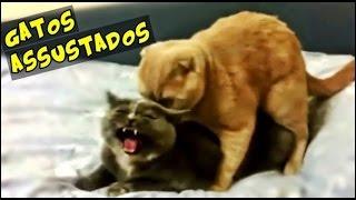 Gatos brincando, levando e tomando sustos - Videos Engraçados