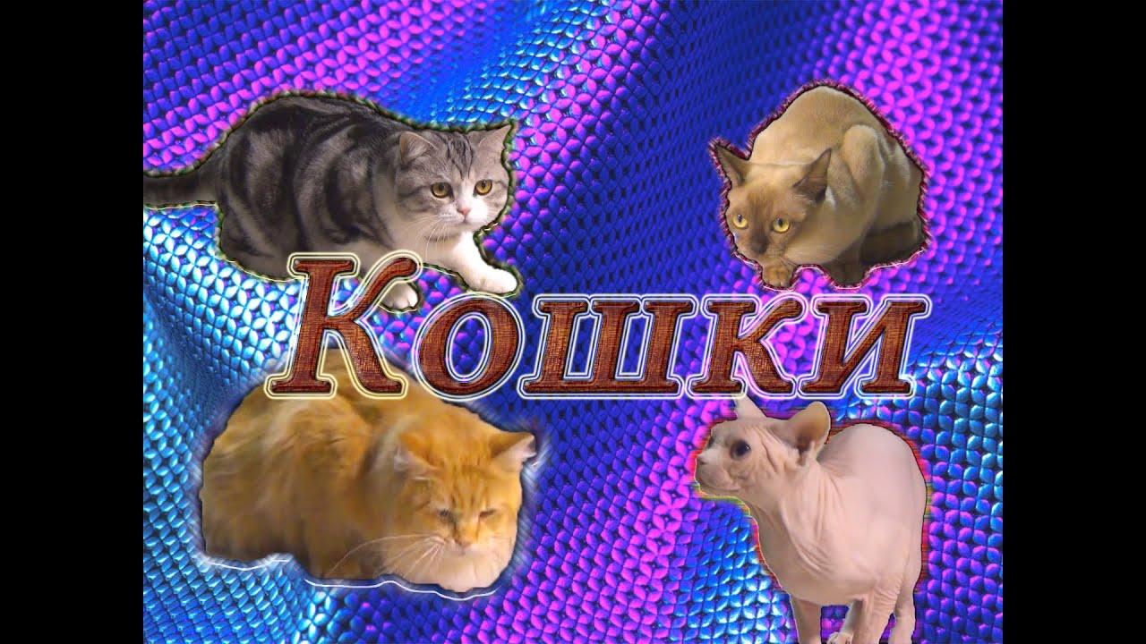 кошек разных пород смешные