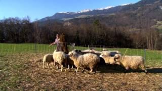 Bockige Stars: Das Wollreich Haslital in Meiringen