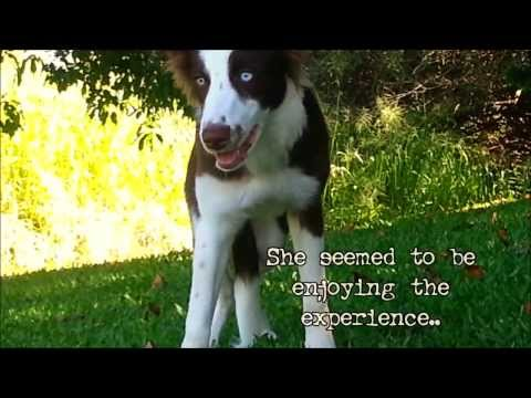 FUNNY DOG EATS WILD PSYCOACTIVE SHROOMS - CAUGHT ON TAPE!