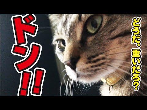 朝、目が覚めると猫さんが胸の上に…!