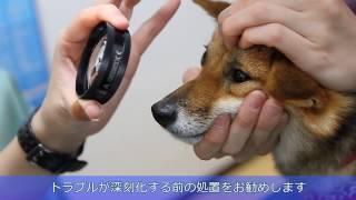わんちゃん猫ちゃんの歯科治療なら早良区の室見動物病院へ